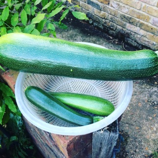 The oversized courgette